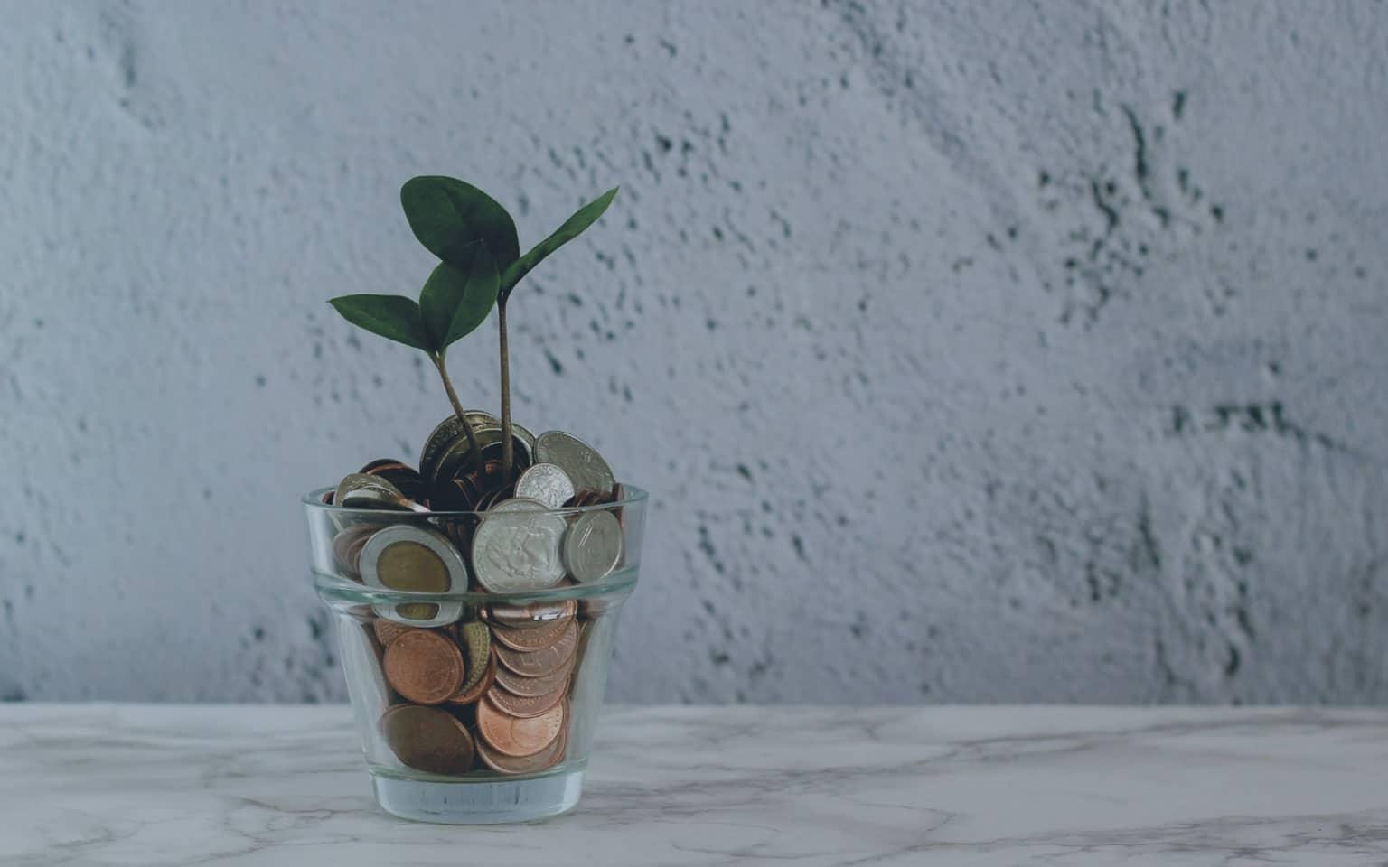 Foto vidro com dinheiro e uma árvore crescendo dentro demonstrando a importância da educação financeira